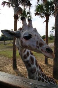 Busch Gardens, FL