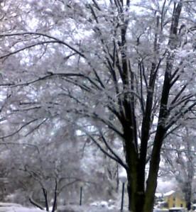 Snow In NY